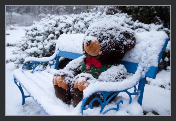 Teddie Bear left on park bench